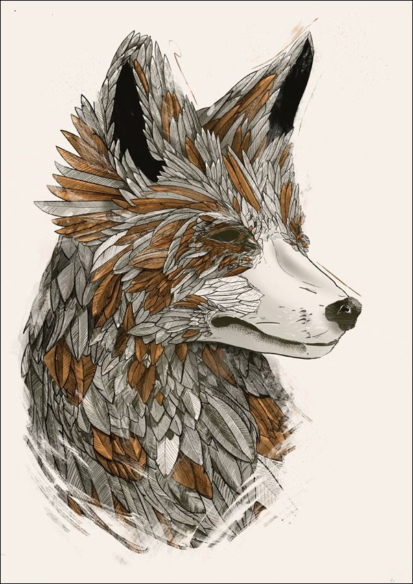 Feathered fox 2 - plakat wymiar do wyboru: 50x70 cm