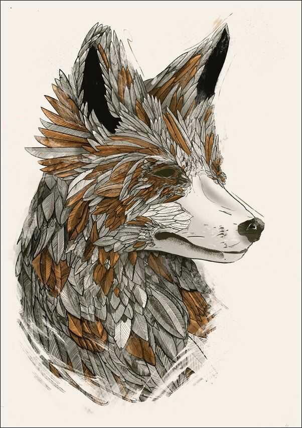 Feathered fox 2 - plakat wymiar do wyboru: 60x80 cm