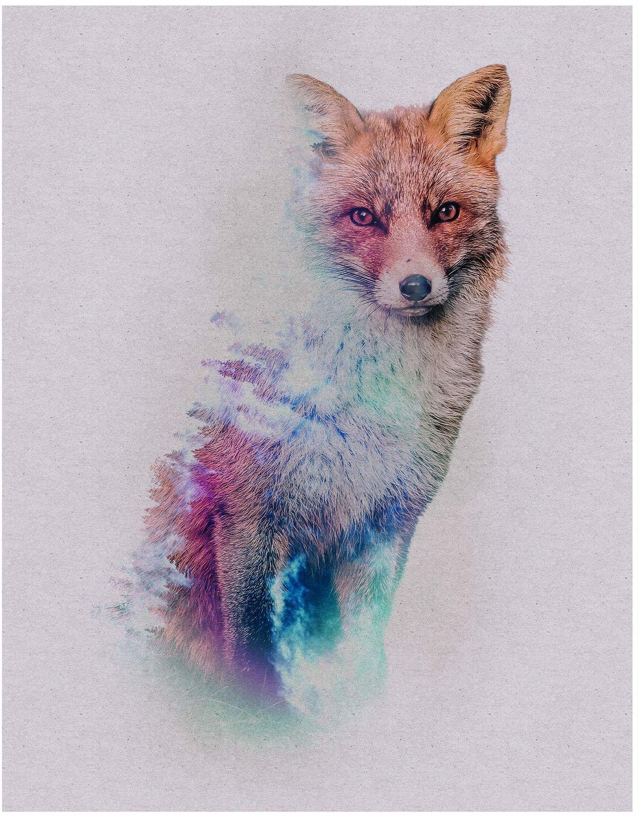 Komar obraz ścienny Animals Forest Fox plakat, obraz, salon, sypialnia, dekoracja, druk artystyczny bez ramy P084B-40x50 rozmiar: 40 x 50 cm (szerokość x wysokość)