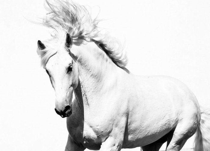 Fototapeta ścienna - Arabski Koń - 254x183 cm