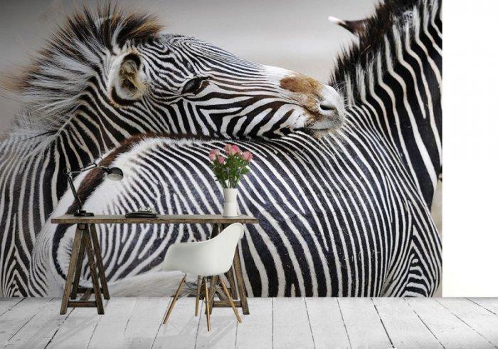 Fototapeta na ścianę - Zebra - 366x254 cm
